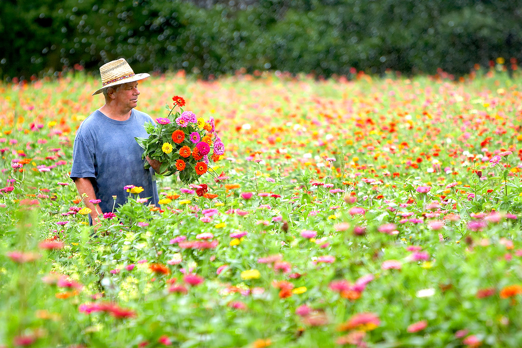 Man picking flowers